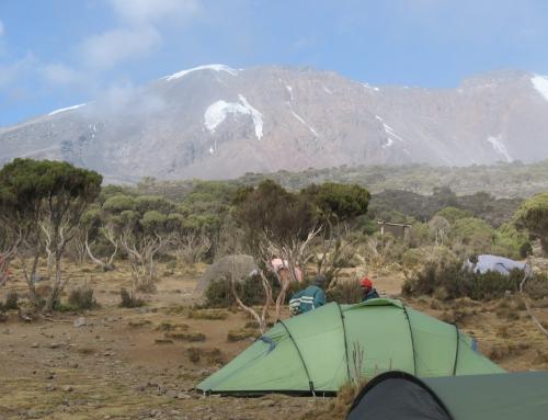 Kilimanjaro und Safari