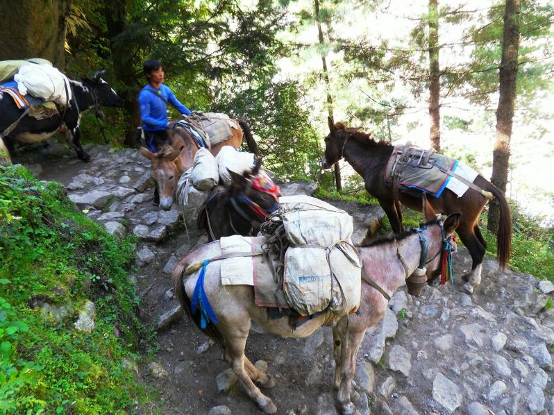 abenteuerreich Erlebnistouren, Trekkingtour, Kathmandu, Everest, Lukla, Himalaya,
