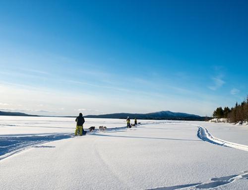 Hundeschlittentour durch Fjell – Schwedisch Lappland