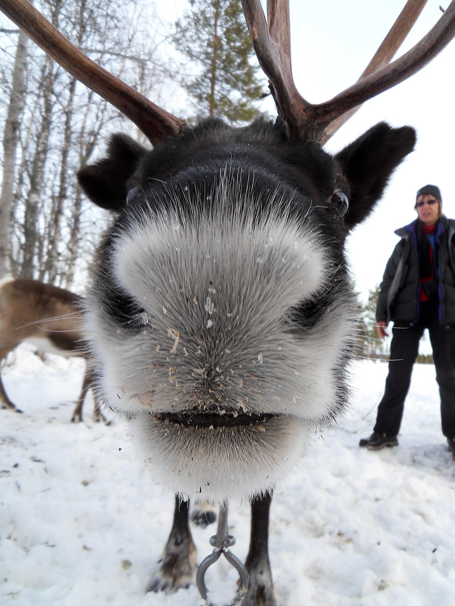 abenteuerreich Erlebnistouren, Pulkatour, Lappland, Schweden, Samen, Trekkingtour, Schneeschuhtour