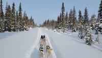 abenteuerreich Erlebnistouren, Husky, Hundeschlittentouren, Huskytouren, Schweden, Lappland, Nordschweden geführte Touren