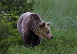 abenteuerreich, Erlebnistouren, finnland, polaris, atv, quad, braunbären, stand up, kanutouren, rafting, angeln, fatbike,
