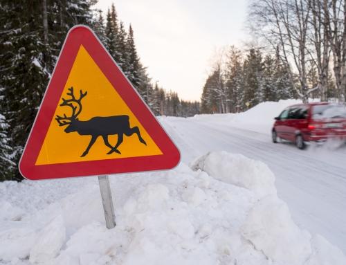 Schneeschuhwanderung am Polarkreis – Nordschweden (4 Tage)