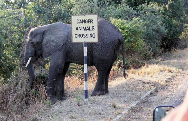 abenteuerreich, erlebnistouren, südafrika, 4x4, krüger national park, mosambik, dachzelt, selbstfahrerreise, safari, geführte safari, toyota hilux, marloth park, wale beobachten