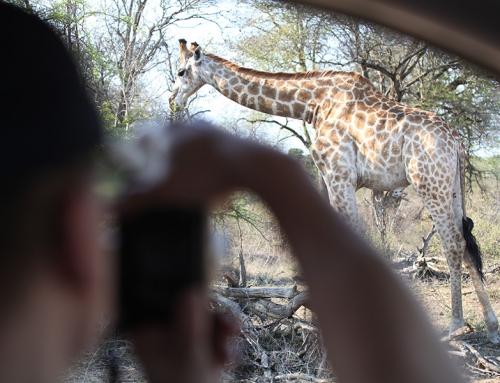 Krüger Nationalpark und Königreich Eswatini Intensiv – Selbstfahrerreise