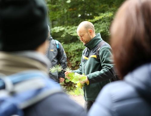 Mit Förster Stephan im Wald (1/2 Tag)